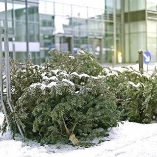 GSAK Weihnachtsbäume Abholung